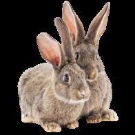 Conejos Nacionales
